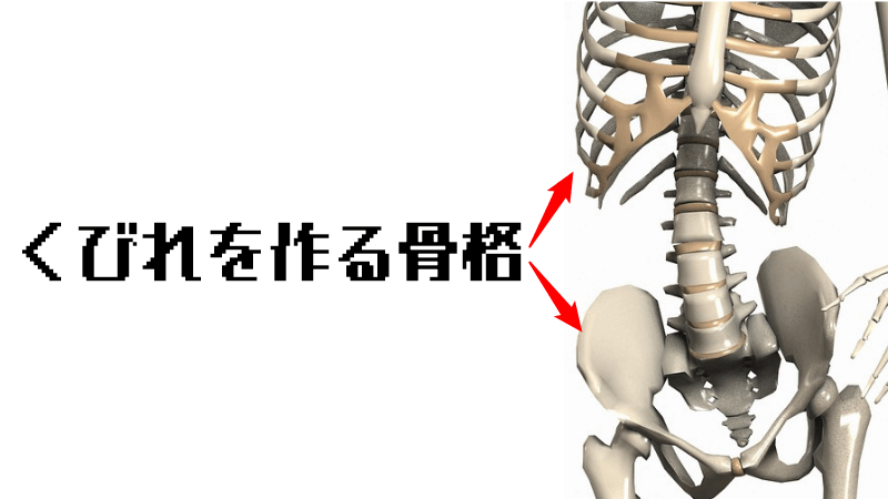 くびれの骨格