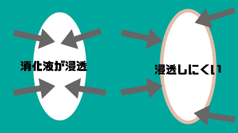 消化液の浸透の違い