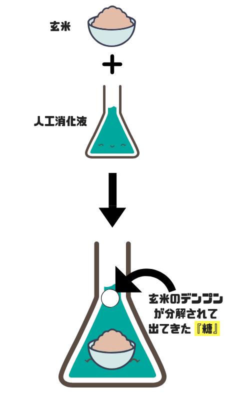玄米のデンプン分解