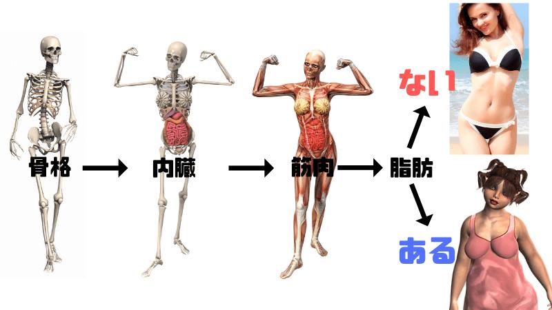 体脂肪とくびれの関係