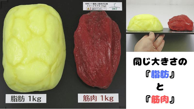 脂肪と筋肉の同じ重さでの大きさ比較